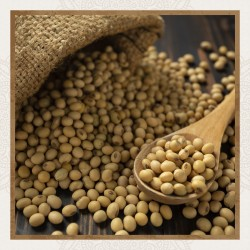 Soja (Soya Beans)  500g