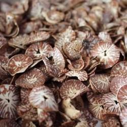 Noz de Areca Laminada (Supari Laminated) 100g